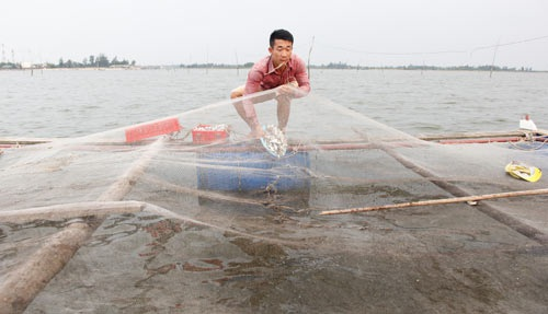 Chàng trai bỏ lương 9 triệu về làng nuôi cá lồng lãi 200 triệu đồng/năm - 2