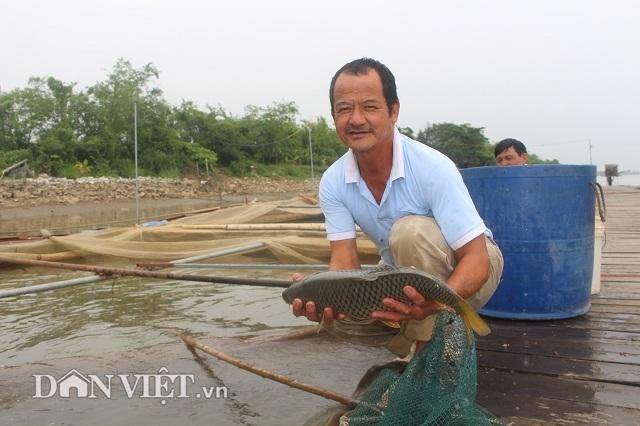 Chơi sang cho cá chép ăn đậu Úc, nông dân Thái Bình thu tiền tỷ - 2