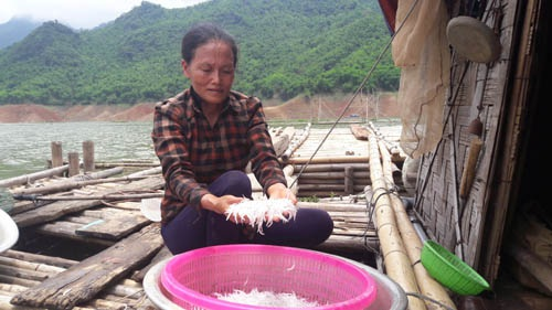 Chị Nguyễn Thị Dung cho biết, cá ngần chỉ xuất hiện vào những ngày cuối tháng 6.