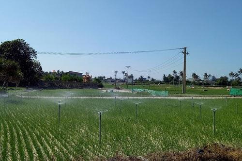 Người dân xã An Hải (Lý Sơn, Quảng Ngãi) làm đất để trồng tỏi. Ảnh: V.T