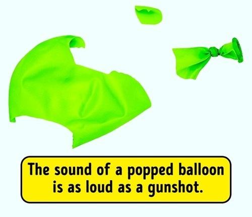 Âm thanh của một quả bóng bay nổ lớn bằng tiếng súng bắn