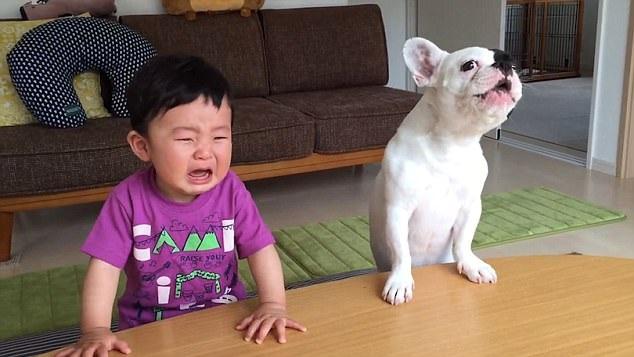 Chú cún Baloo cũng kêu lên cùng chủ