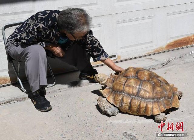 Bà mua con rùa cách đây 10 năm, lúc nó còn nhỏ như lòng bàn tay