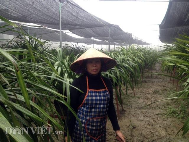 Bà Nga làm lưới che sương muối, năng nóng cho vườn địa lan của gia đình