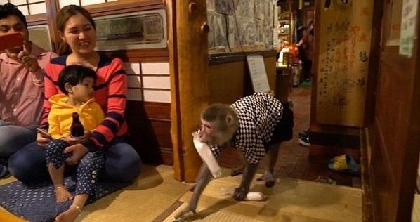 Yat và Fuku được diện trang phục bồi bàn y như người thật và được huấn luyện để lấy khăn, bưng bia rượu, thức ăn cho khách.