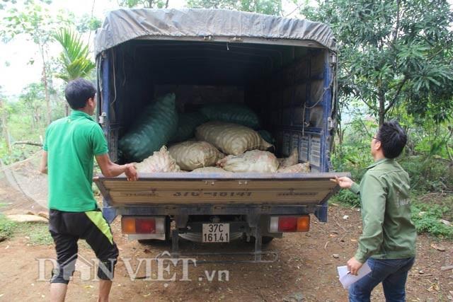 Hối hả thu hoạch chanh leo kiếm tiền sắm Tết - 5