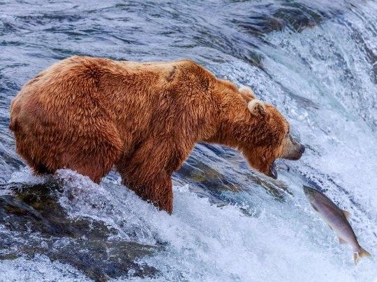 20 bức ảnh quyến rũ bạn đến Alaska - 6