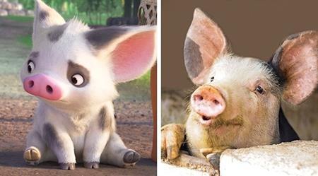"""Chú lợn Pua quá đỗi đáng yêu trong """"Moana"""" kỳ thực hoàn toàn tồn tại trên đời"""