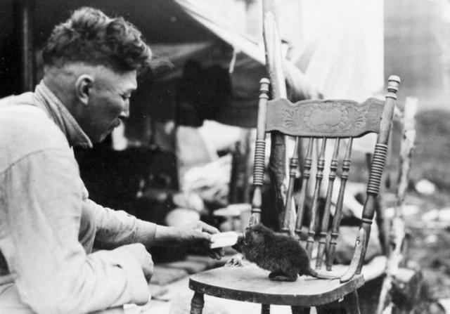 Một người đàn ông cho hải ly con bú sữa