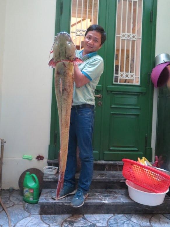 Con cá Sông Đà dài gần 1,6m.