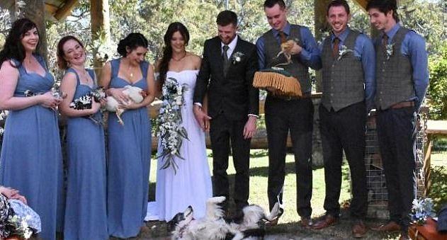 Cặp đôi chụp ảnh cùng phù dâu phù rể và các con vật