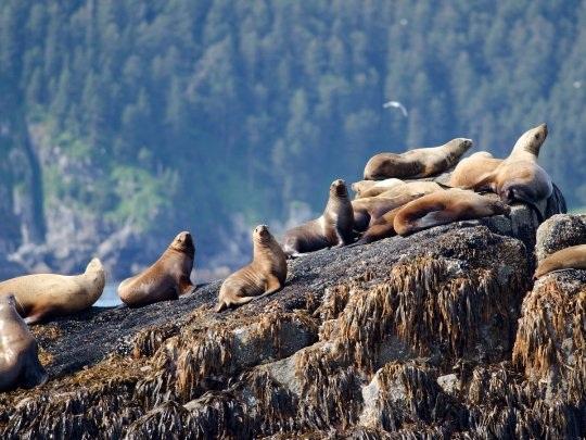 20 bức ảnh quyến rũ bạn đến Alaska - 7