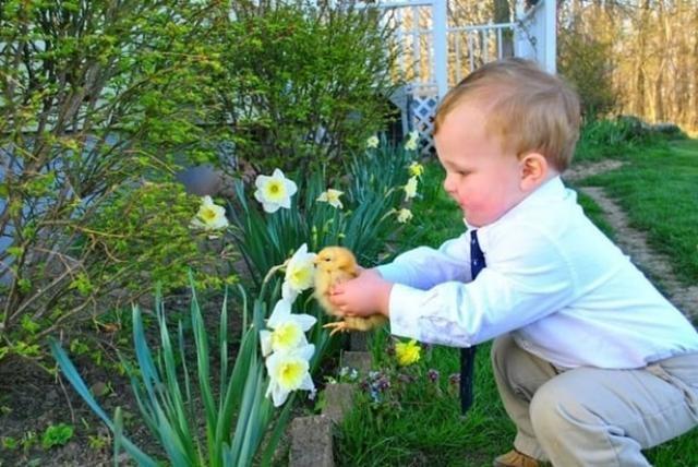 Bé trai cho gà con ngửi hương hoa