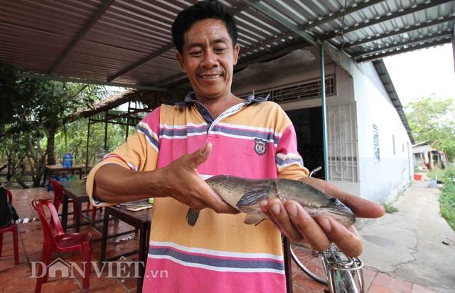 Đàn cá lóc biết nhảy múa ở Cần Thơ bị bán thịt giá 70.000 đồng/kg - 3