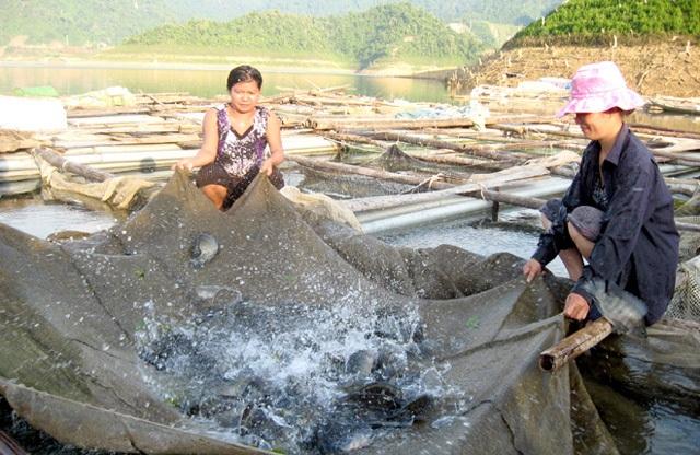 Nghề nuôi cá lồng đã mang lại thu nhập khá cho bà con (Báo Tuyên Quang)