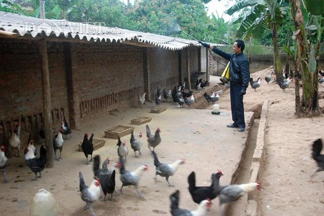 Ông Trọng phun thuốc khử trùng khu trại nuôi gà Ai Cập (Ảnh: Vĩnh Thắng)