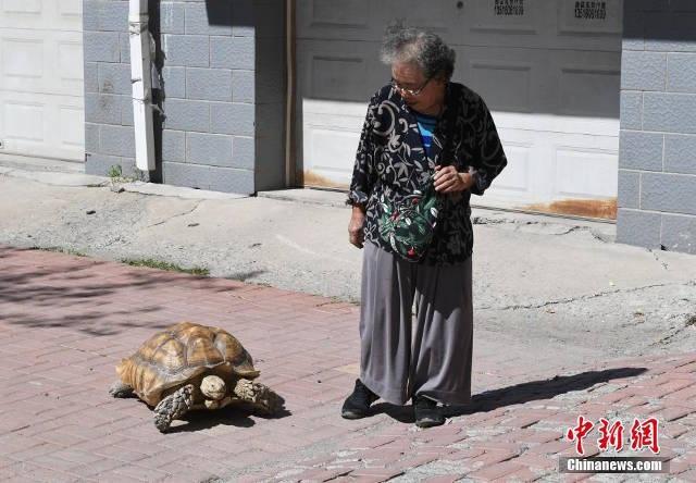 Con rùa ăn táo, cam, trứng và bánh mỳ hằng ngày