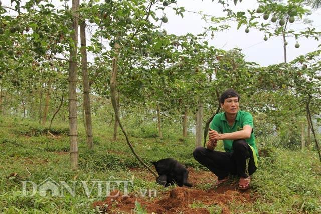 Hối hả thu hoạch chanh leo kiếm tiền sắm Tết - 6