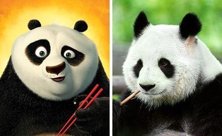 """Chú gấu Po trong """"Công phu gấu trúc"""" hẳn sẽ phải mắt tròn mắt dẹt khi nhìn thấy anh em đồng loại của mình"""
