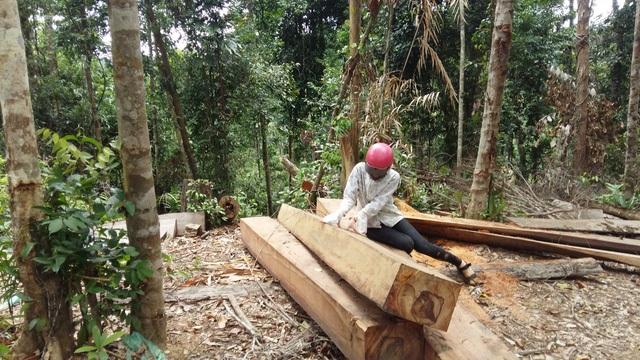 Hiện trường một vụ phá rừng tại Đắk Lắk