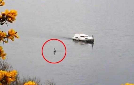 """""""Quái vật hồ Loch Ness"""" bất ngờ trồi lên, ngỏng cổ di chuyển gần tàu du lịch - 1"""