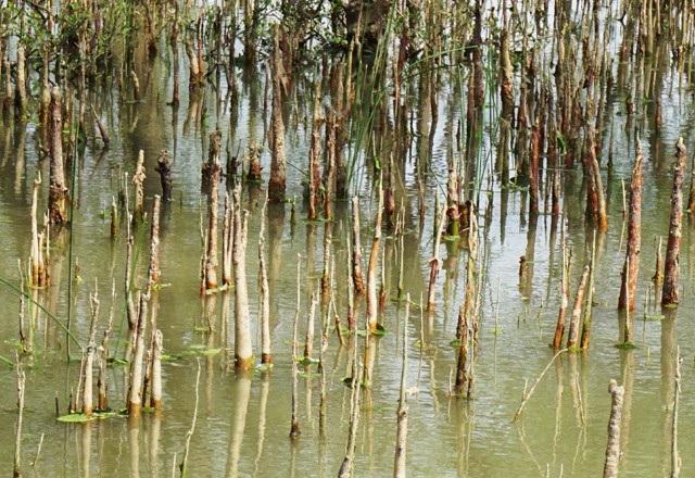 Rừng bần có diện tích hơn 70ha, chiều dài 4km, chiều rộng có chỗ đến 300m, kéo dài từ hạ nguồn sông Lam ra đến biển, dọc các xã Hưng Hòa (TP Vinh) đến xã Nghi Xuân (huyện Nghi Lộc).