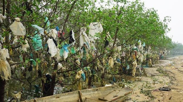 Vô số túi ni lông ken đặc cánh rừng bần nguyên sinh tại Nghệ An. Hệ sinh thái đa dạng của cánh rừng nguyên sinh ngập mặn này đang bị đe dọa nghiêm trọng từ phế phẩm sinh hoạt của người dân. (Ảnh: Hoàng Lam)