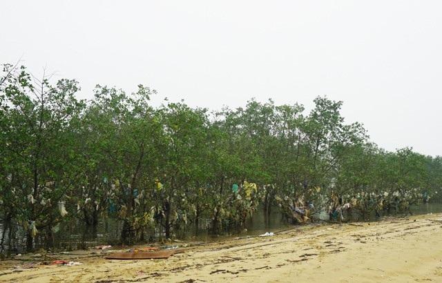 Hàng năm các địa phương đều huy động Hội phụ nữ phối hợp với Đoàn thanh niên và các tổ chức xã hội khác thu dọn rác nhưng không xuể. Mỗi lần có lũ hay thủy triều lên, hàng tấn rác lại dạt vào, tấn công rừng bần