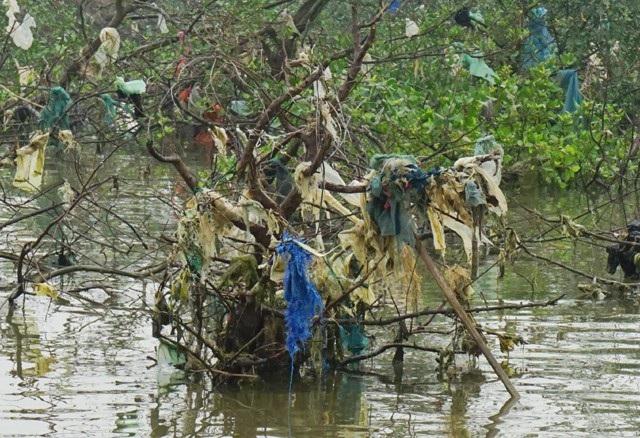 Cây bần đã chết trong khi đang gánh hàng đống rác thải là những túi ni lông, bạt, thậm chí là những tấm lưới hỏng của ngư dân