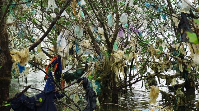 Tình trạng này thường xuất hiện sau những đợt lũ. Hàng tấn rác thải bị nước lũ cuốn ra biển và neo lại ở rừng bần thuộc địa phận các xã Nghi Xuân, Phúc Thọ (huyện Nghi Lộc, Nghệ An)