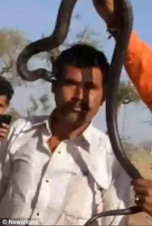 Khoảnh khắc con rắn độc cắn vào thái dương của nam du khách nhưng người này không nhận ra