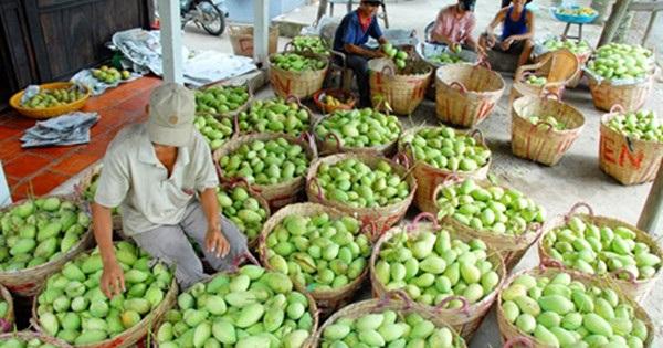 Xuất khẩu rau quả là ngành hàng có tăng trưởng nổi bật nhất trong nhóm nông sản.