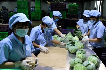Quy trình khép kín từ chọn giống đến đưa sản phẩm ra thị trường đang được nhiều cơ sở triển khai