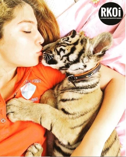 Cô gái con nhà giàu đang hôn thú cưng của mình là một con hổ con. (Nguồn RKOI)