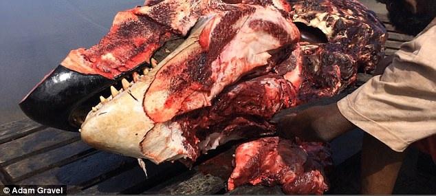 Cảnh tượng đầu cá voi bị xẻ thịt gây sốc