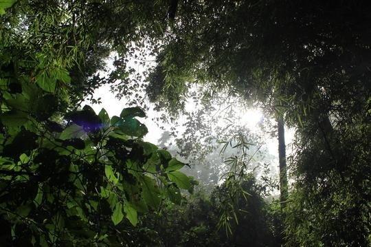 Các nhà nghiên cứu chỉ ra rằng loài người đã có một tác động đáng kể đến hệ sinh thái của rừng nhiệt đới qua các hoạt động đốt rừng.