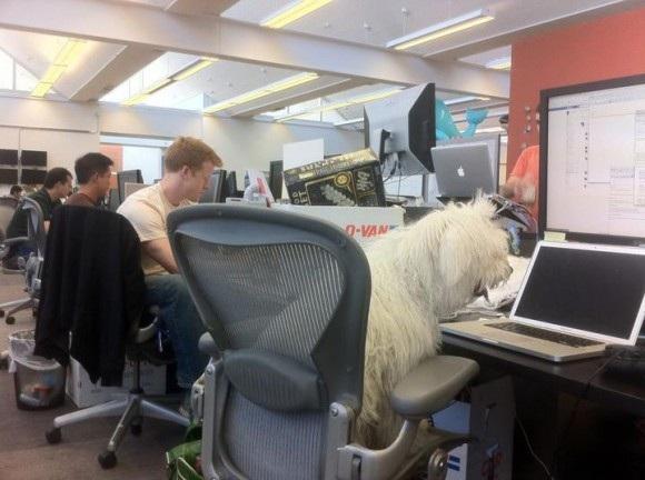 Chú chó nổi tiếng của Mark Zuckerberg