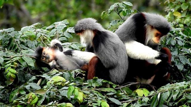 Lãnh đạo Đà Nẵng nhận định rõ: Giá trị cảnh quan, hệ sinh thái tự nhiên ở bán đảo Sơn Trà là có một không hai (ảnh: Lê Phước Chín)