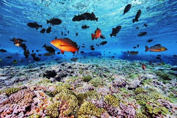 Sự sống ở đại dương sẽ bị xóa sổ ngay lập tức.