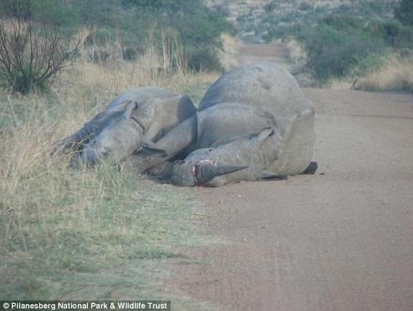 Hình ảnh hai mẹ con tê giác bị bắn chết khiến nhiều người cảm thấy đau lòng