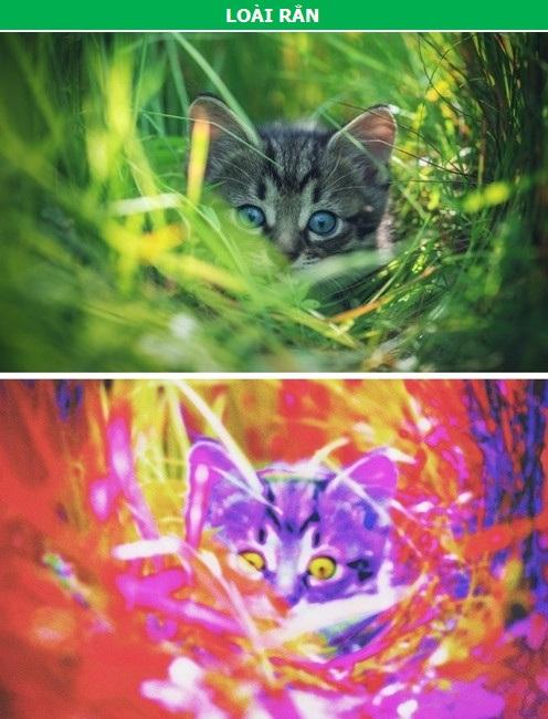 Thế giới sẽ như thế nào qua con mắt của các loài động vật? - 4