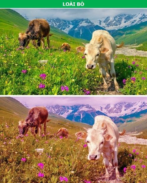 Thế giới sẽ như thế nào qua con mắt của các loài động vật? - 6