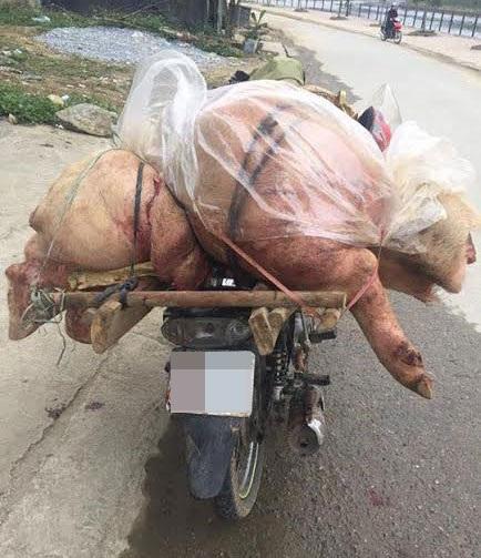 Thịt lợn không rõ nguồn gốc, lợn bệnh giá rẻ do tư thương chuyển từ nơi khác tới bán ở huyện Bắc Hà (tỉnh Lào Cai) bị lực lượng chức năng phát hiện thu giữ để xử lý theo quy định pháp luật.