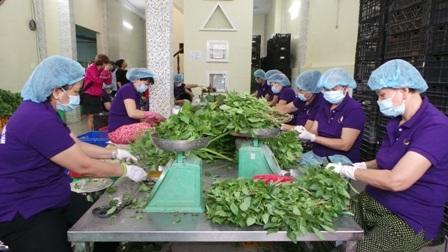 Chuỗi cung ứng thực phẩm sạch sẽ được kiểm soát từ nông trại đến bàn ăn