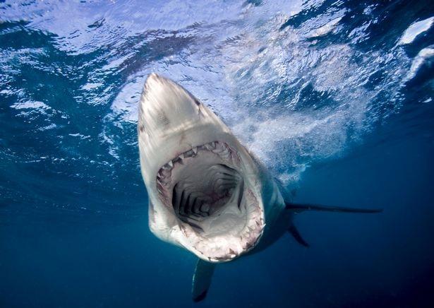 Thủy quái săn mồi tương tự như cá mập trắng thời hiện đại.