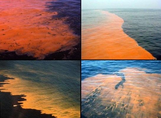 Hiện tượng tảo độc xâm chiếm các vùng biển tạo ra những cơn sóng màu đỏ như máu.