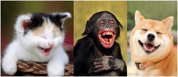 Động vật có biết cười như con người hay không? - 1