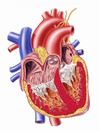 Các tế bào gốc có thể mở ra hướng điều trị mới cho bệnh nhân bị suy tim.