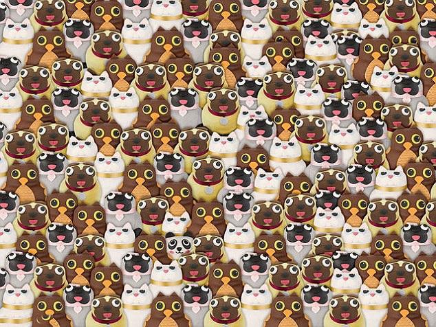 Trong đám chó pug, mèo và cú mèo này có một chú gấu trúc Pete. Bạn phát hiện ra chưa?