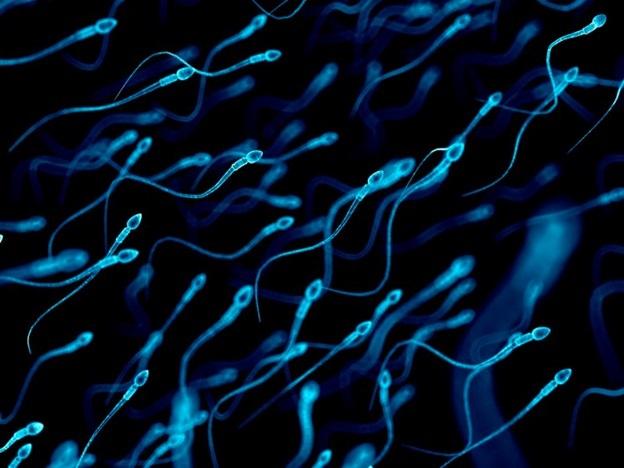Số lượng tinh trùng của đàn ông phương Tây đang ở mức thấp kỷ lục - 1